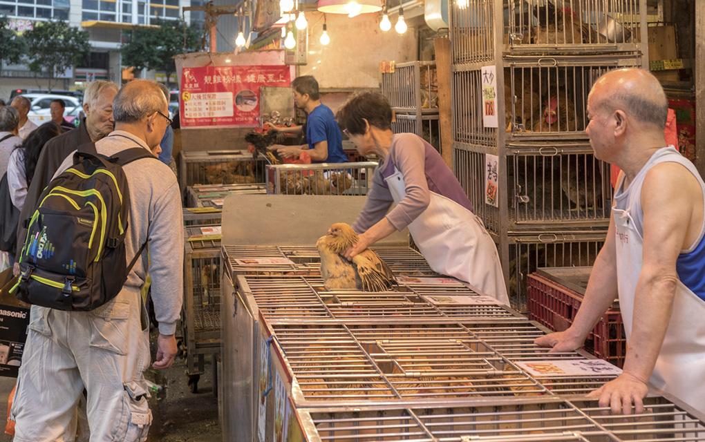 No más 'calditos'; Wuhan ya prohíbe consumo de animales salvajes
