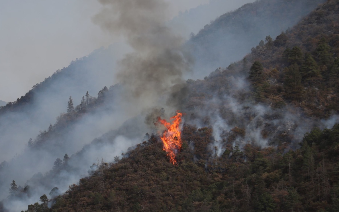Confirmadas 790 hectáreas afectadas por incendios forestales en Querétaro